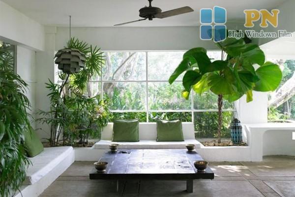 trồng cây xanh là cách làm mát phòng